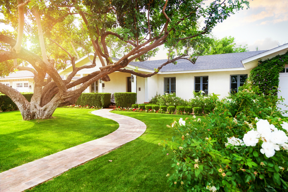 Tips for Homeowners to Maintain a Healthy Lawn